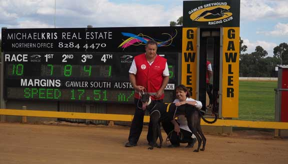 Gawler Greyhounds Racing Report