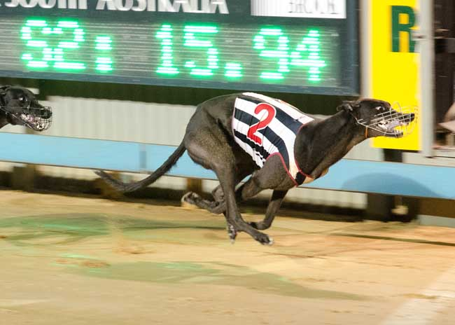 It's Classified takes out the 2015 Gawler Gold Cup